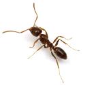 illustration apache ant